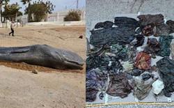 Cá nhà táng chết dạt vào bờ biển, các nhà môi trường lo ngại khi phát hiện 29 kg rác thải trong bụng con vật xấu số