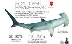 Phát hiện cá mập trên miệng núi lửa nhưng không ai lý giải nổi vì sao chúng lên được đó