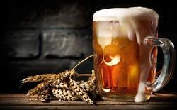 Nếu là tín đồ của bia, chắc chắn bạn sẽ cần phải biết những kiến thức nhập môn này