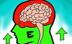 """Các nhà khoa học đã tìm ra thứ """"công tắc"""" trong não bộ giúp tắt đi nỗi sợ hãi và bật lên niềm can đảm"""