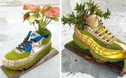 BST cây cảnh trồng trong giày khiến mọi 'sneakerhead' phải suýt xoa ngưỡng mộ