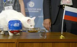"""7 """"tiên tri"""" động vật đã và đang gây sốt vì dự đoán đúng kết quả World Cup"""