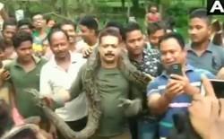 Mải chụp ảnh sau khi bắt được con trăn dài hơn 5 mét, anh chàng kiểm lâm Ấn Độ suýt mất mạng