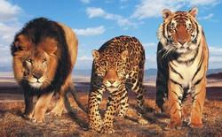 """Phim """"Madagascar"""" đời thực: Khi hổ, báo, sư tử, gấu chán vườn thú rồi rủ nhau trốn trại đi chơi"""