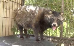 Ông chú tưởng bở mua được chó Phốc sóc với giá 1 triệu, 8 tháng sau mới phát hiện ra đó là gấu mèo