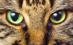 """Thế giới dưới mắt của các loài khác nhau: mắt con người nhìn cực kì sắc nét, hóa ra ruồi muỗi """"cận nặng"""", chẳng nhìn thấy cái gì cả"""