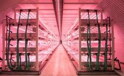 Trung Quốc: Nông trại công nghệ cao rộng 5000m2, sản lượng 8 - 10 tấn/ngày nhưng chỉ cần 4 nhân viên vận hành