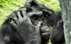 10 sự thật thú vị về động vật hoang dã mà chúng ta không được dạy hồi còn đi học