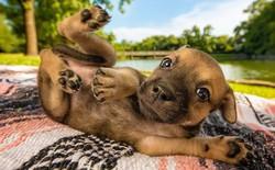 """Ảnh chó đẹp nhất năm 2018: Tôn vinh """"bạn tốt nhất của con người"""" qua những thước phim đầy cảm xúc"""