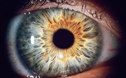 Nghiên cứu mới: công nghệ quét mống mắt có thể phân biệt được mắt người sống và người chết, độ chính xác lên tới 99%