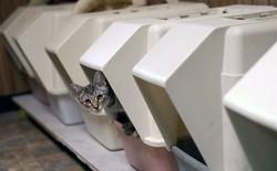 """Người nuôi mèo coi chừng: Có một loại ký sinh trùng trong phân mèo khiến bạn bỗng dưng cực """"máu"""" khởi nghiệp"""