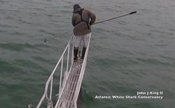 [Video] Cá mập trắng vọt lên khỏi mặt nước, định đớp nhà nghiên cứu đang đứng trên thuyền