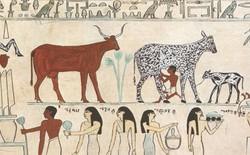 """Phô mai 3.200 năm trong lăng mộ Ai Cập bị """"nguyền"""" bằng vi khuẩn chết người"""