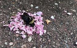 Video khiến cộng đồng mạng bất ngờ: bầy kiến đặt vòng hoa quanh xác con ong - có phải chúng ta làm nghi lễ tiễn đưa như trong phim?