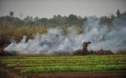 Trung Quốc: Lắp 4339 camera an ninh để ngăn chặn nông dân đốt rơm gây ô nhiễm môi trường
