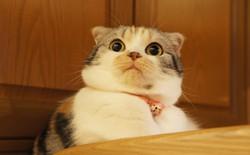 """Phòng nghiên cứu """"chuẩn 5 sao"""" cho mèo hoang tại Mỹ: vui chơi, ăn no ngủ ấm cả ngày rồi chờ bị đem ra thí nghiệm triệt sản"""