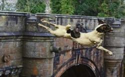 Giải mã bí ẩn cây cầu khiến hàng trăm con chó tự tử hàng loạt tại Scotland