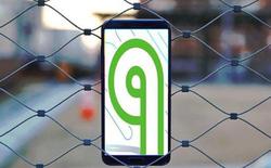 Trong khi Android 9 Pie đã ra mắt, gần 90% người dùng còn chưa biết đến Android 8 Oreo