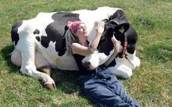 Ôm ấp các chú bò đã trở thành trào lưu và bạn sẽ tốn khoảng 2 triệu đồng cho 1 giờ ôm