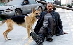 """Abbey, cô chó thông minh trong """"I Am Legend"""" của Will Smith giờ đã 13 tuổi, không nghe thấy gì nhưng vẫn hiếu động"""