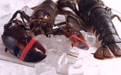 Tranh cãi xung quanh điều luật cấm luộc tôm hùm sống của Thụy Sĩ: Tại sao các đầu bếp bất chấp để làm điều đó?