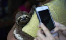 Chụp ảnh selfie cùng động vật hoang dã? Có thể bạn đang ngược đãi chúng mà không hề hay biết