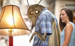 Nguồn gốc của loạt meme bướm đêm và chiếc đèn đang khuynh đảo Internet