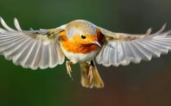 Chim chóc có thể nhìn thấy từ trường, nhưng đến bây giờ con người mới hiểu được tại sao