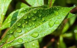"""Lý giải cho """"mùi của mưa"""" - mùi hương kì lạ mà chúng ta ngửi thấy mỗi khi trời mưa"""