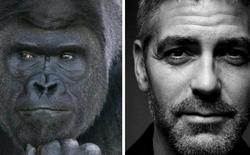 Đây là chú khỉ đột đẹp trai nhất Nhật Bản, được ví như George Clooney, Steve Jobs của thế giới động vật