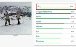 Bạn có tin không, nhận dạng hình ảnh của Google bảo đây là một chú cún