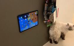 Làm gì sau khi mua iPad Pro 20 triệu? Dính lên tủ lạnh chụp khoe kiếm Like chứ sao nữa!