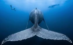 Như lạc vào thế giới khác với chùm ảnh đại dương đẹp nhất năm 2018