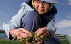 Tại sao người dân ở hòn đảo này sống trên 100 tuổi mà vẫn rất khỏe mạnh?