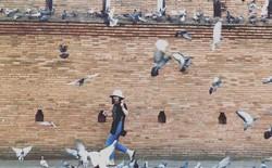 Nghề quái đản nhưng ra tiền ở Thái Lan: Dọa chim bay để du khách chụp hình