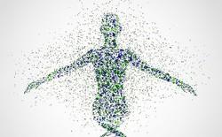 Siêu dự án tham vọng quét được cơ thể người tới độ phân giải từng tế bào