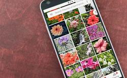 Cuộc vui chóng tàn, người dùng iPhone sắp không được lưu ảnh gốc miễn phí lên Google Photos nữa