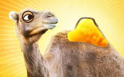 [Vietsub] Lạc đà từng sống ở Bắc Cực và cái bướu của chúng không chứa nước
