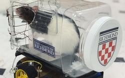 Các nhà khoa học dạy chuột lái ô tô và chúng đã tốt nghiệp xuất sắc thế này đây