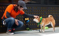 Có 7.000 con chó ở trụ sở Amazon tại Mỹ và đây là cách mà chúng sống sung sướng như ở thiên đường