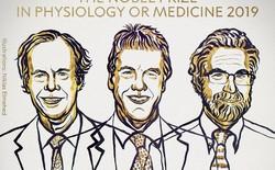 Giải Nobel đầu tiên năm 2019 vừa có chủ nhân: Vinh danh ba nhà khoa học phát hiện ra cơ chế thích nghi oxy của tế bào