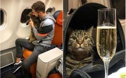 Thanh niên hí hửng post Facebook khoe thủ đoạn mang chú mèo quá cân lên máy bay và cái kết đắng
