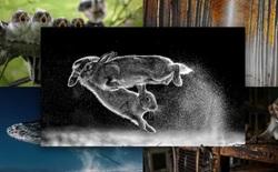 'Thỏ nhảy' là bức hình đoạt giải nhất Cuộc thi nhiếp ảnh Thiên nhiên hoang dã 2019