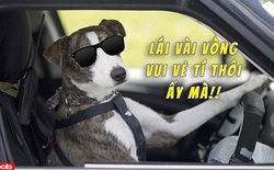 """Bị chủ vô ý nhốt trong ô tô, chú chó """"lái"""" luôn chiếc xe chạy lòng vòng cho vui"""