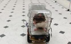 Mỹ: Các nhà nghiên cứu tự chế chiếc ô tô tí hon để dạy loài chuột lái xe