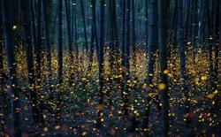 Ô nhiễm ánh sáng đang đẩy côn trùng đến bờ vực tuyệt chủng