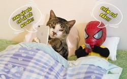 """Cưng muốn xỉu với bộ ảnh chuyến phiêu lưu của """"boss"""" mèo và """"sen"""" Spider-Man"""