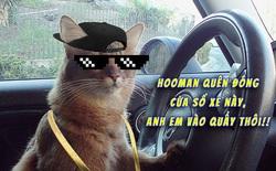 """Phát hiện chiếc ô tô quên đóng cửa sổ, cả đàn mèo hoang rủ nhau chui vào trong """"quẩy"""" tưng bừng"""