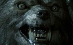 """Bí ẩn hàng loạt gia súc tại Mỹ bị giết hại dã man: Hung thủ là sinh vật giống """"người sói"""", cao gần 3m, có tiếng hú rợn người?"""