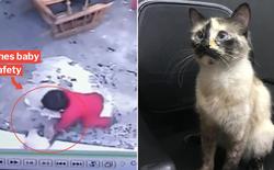 """""""Boss"""" nhà người ta: Thấy chủ nhí sắp ngã xuống cầu thang, chú mèo lập tức """"ra chân"""" cứu nguy kịp thời"""